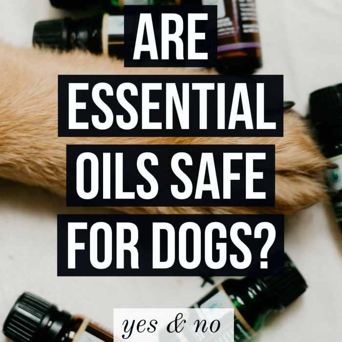 essential oils safe for dogs