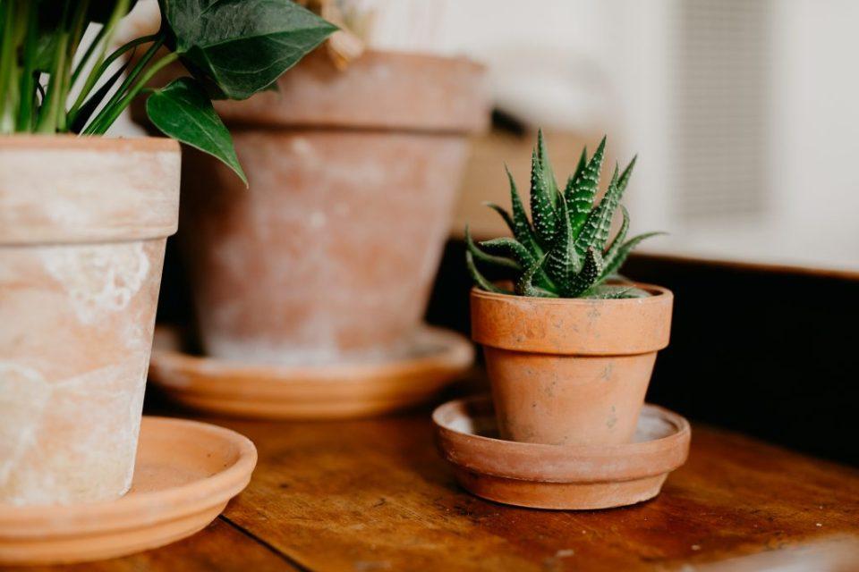 virtually unkillable plants