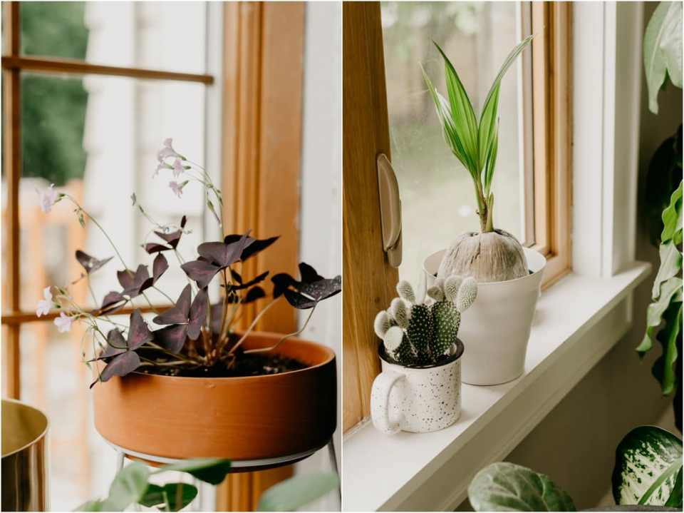 tips for fertilizing your houseplants