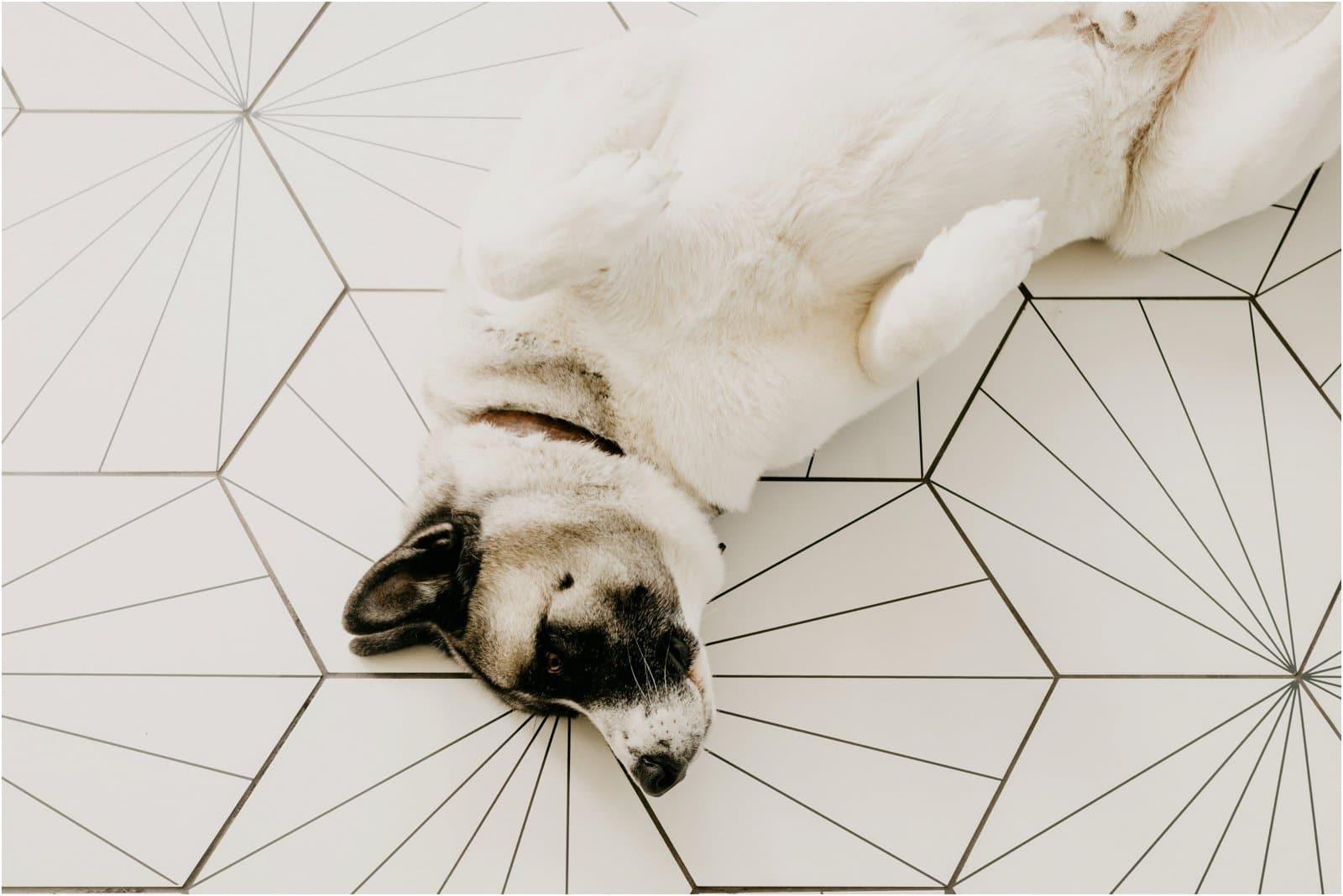 diy porcelain floor tile project