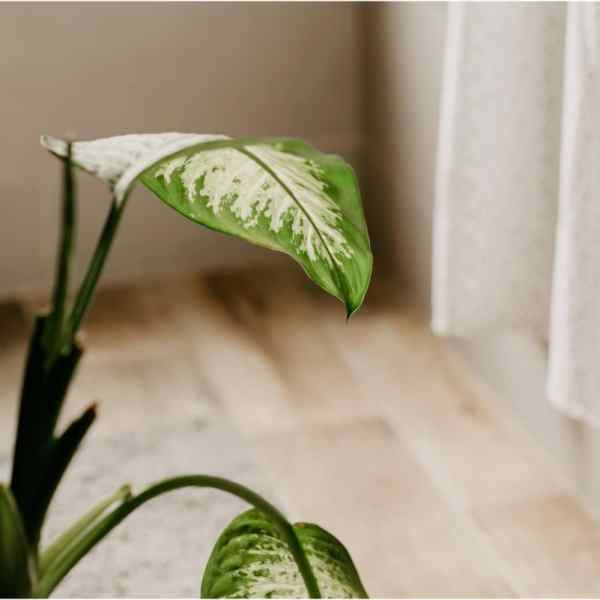 6 Houseplants That Would Love to Live in Your Bathroom