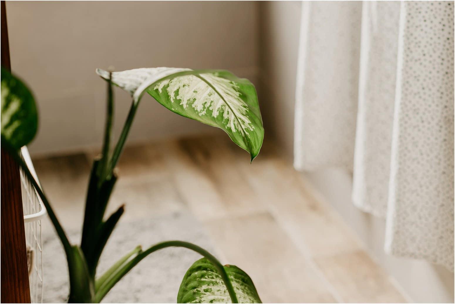 houseplants for your bathroom