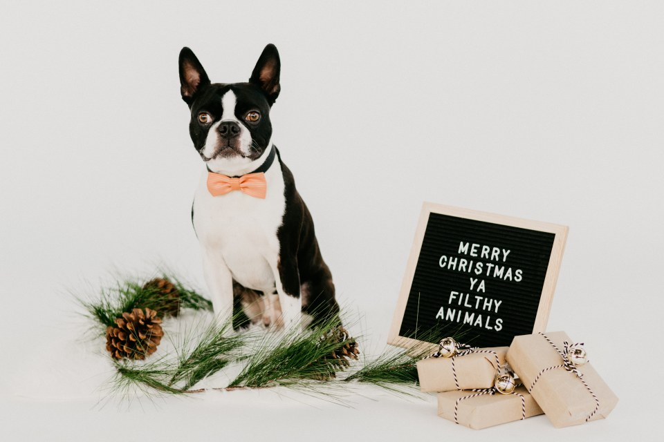 holiday gifts for your dog Christmas Gifts for Your Dog