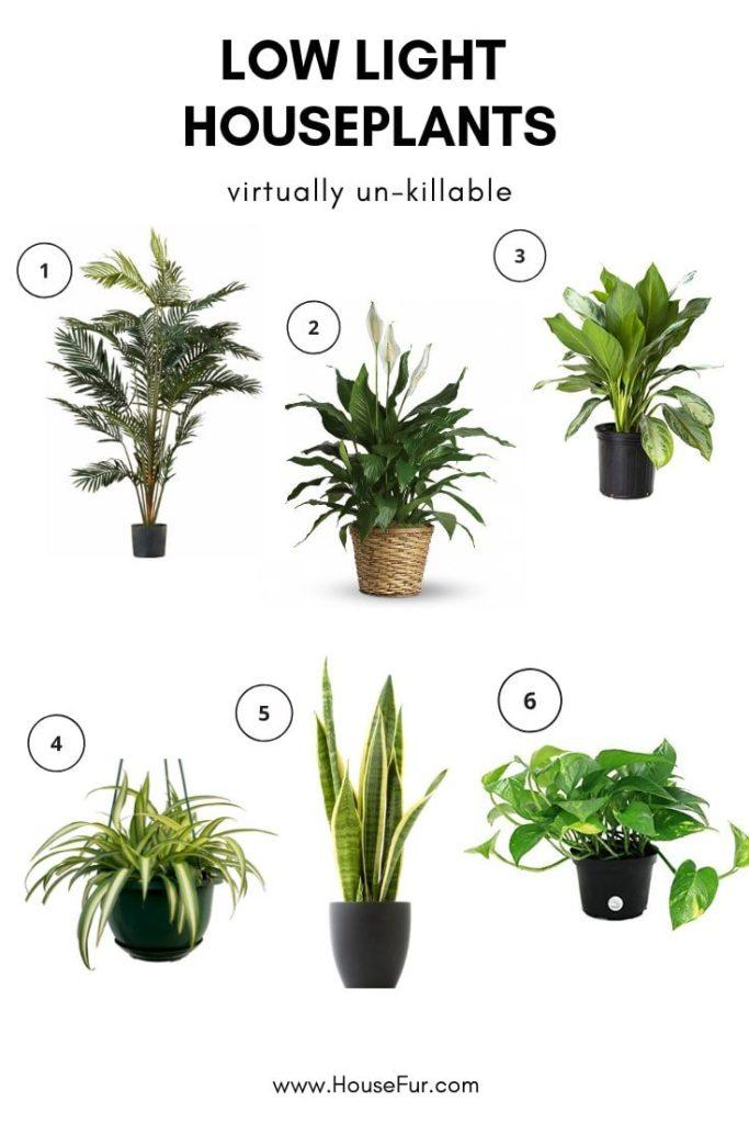 easiest lowlight houseplants