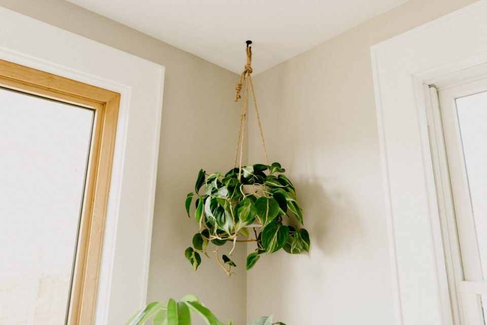 why you need to clean your houseplants