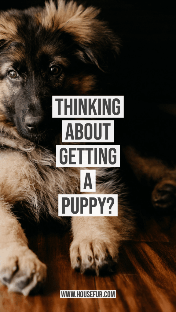 tips before getting a puppy