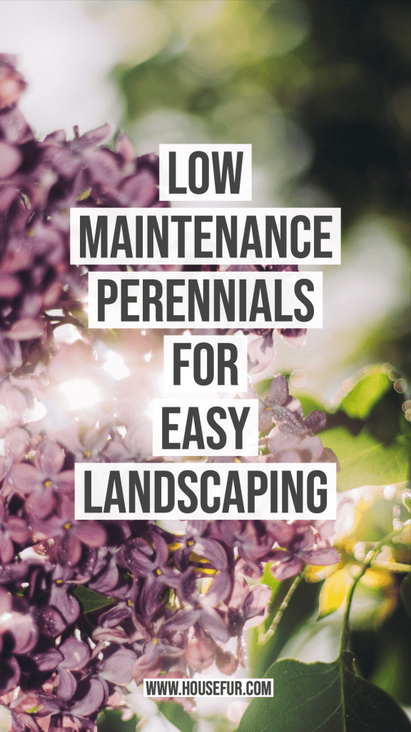 Low Maintenance Perennials for Easy Landscaping