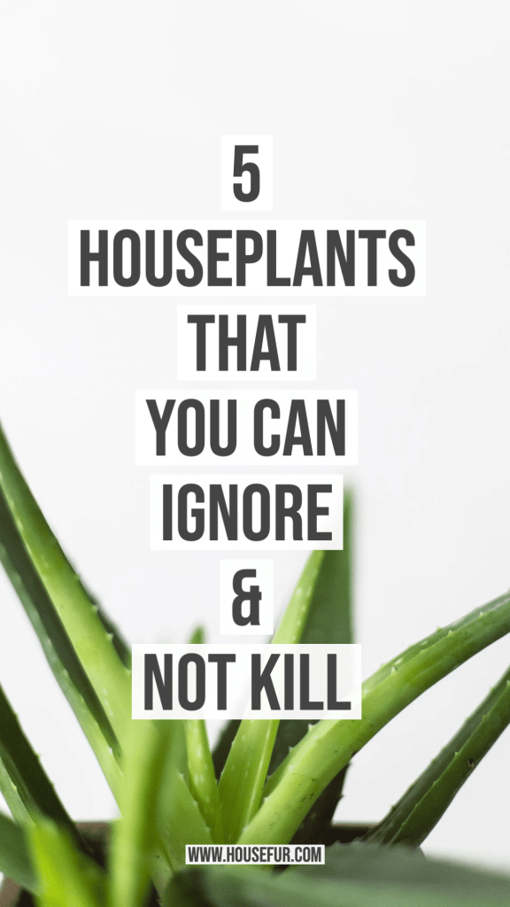 5 Houseplants That You Can Ignore & Not Kill