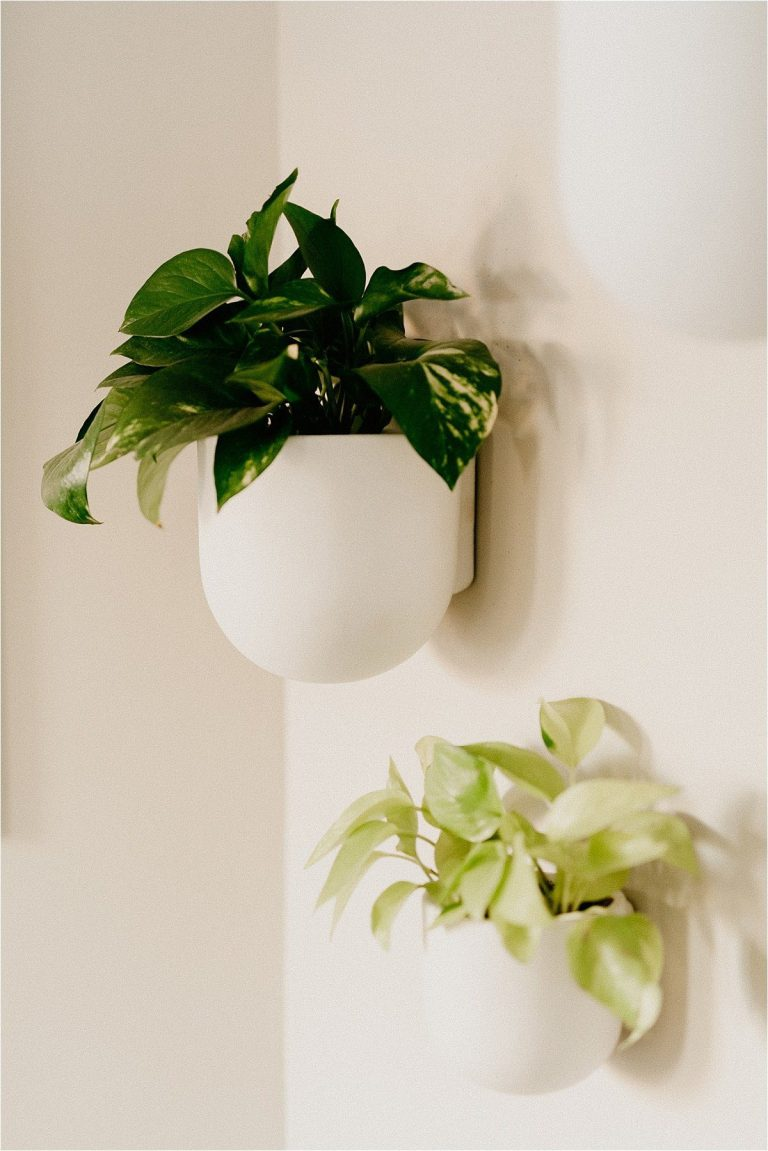 how to repot houseplant