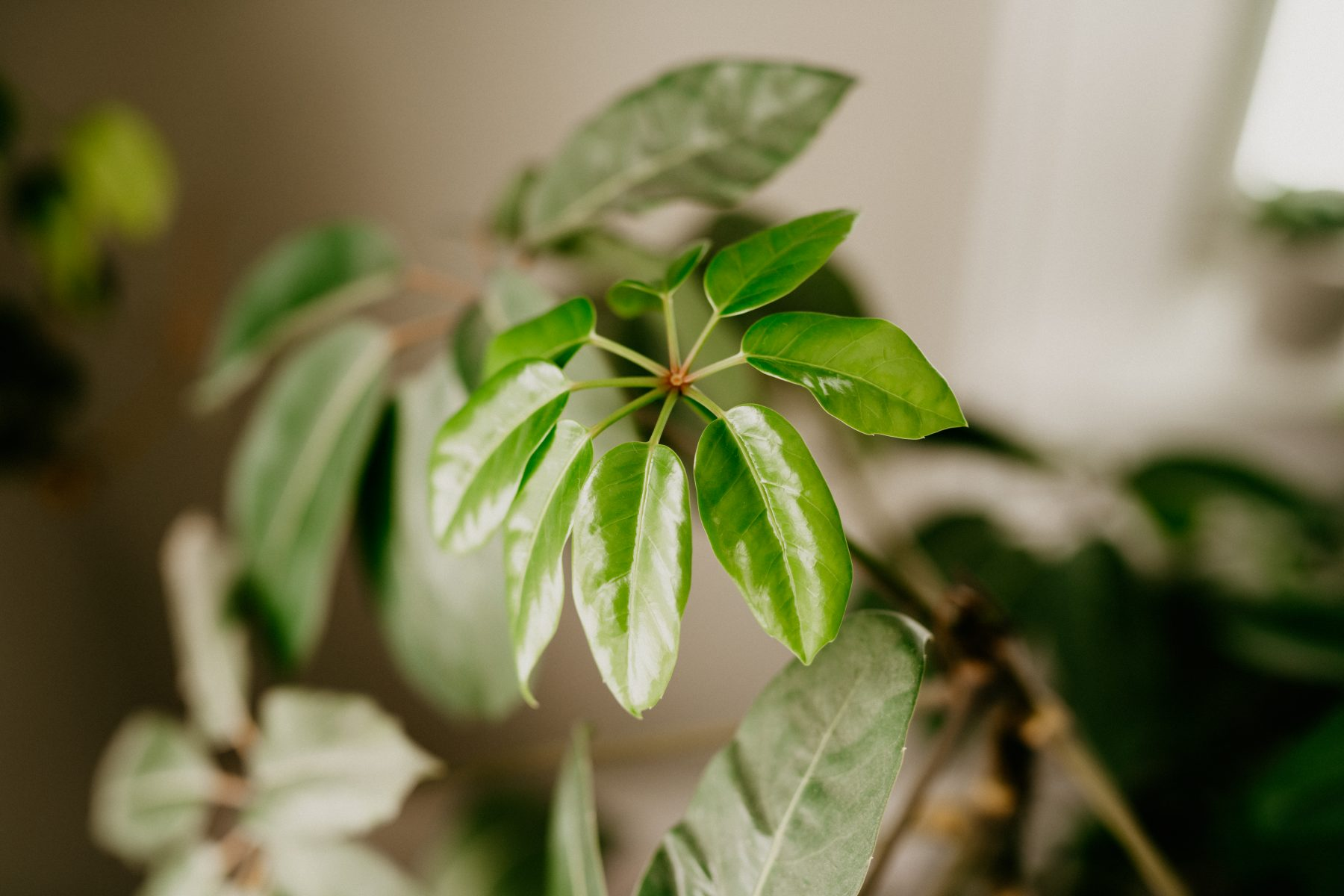 tips for watering houseplants