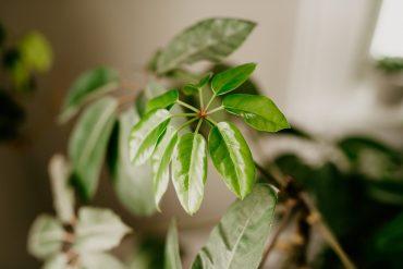 tips for watering houseplants