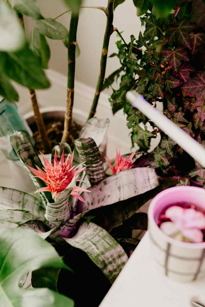 grow light for houseplants