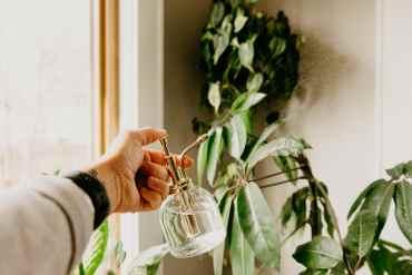 misting houseplants