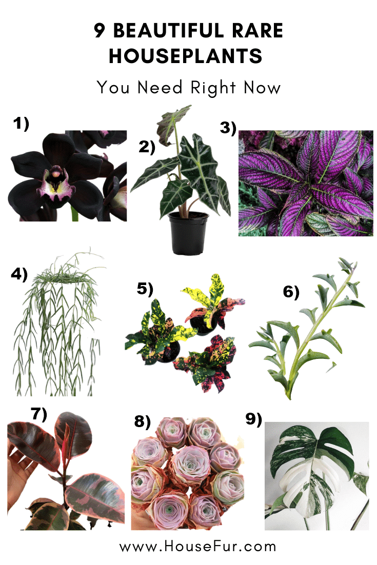 9 rare houseplants