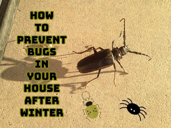 How To Prevent Bugs In Your House After Winter