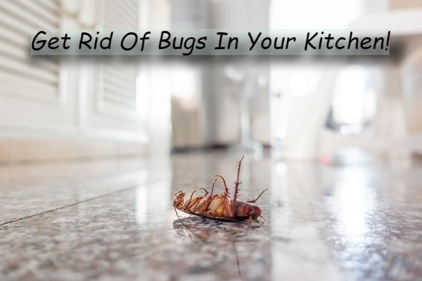 How To Rid Of Bugs In Your Kitchen