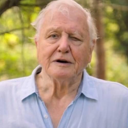David Attenborough Wins An Emmy For Outstanding Narrator