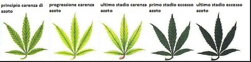 carenze nutritive cannabis