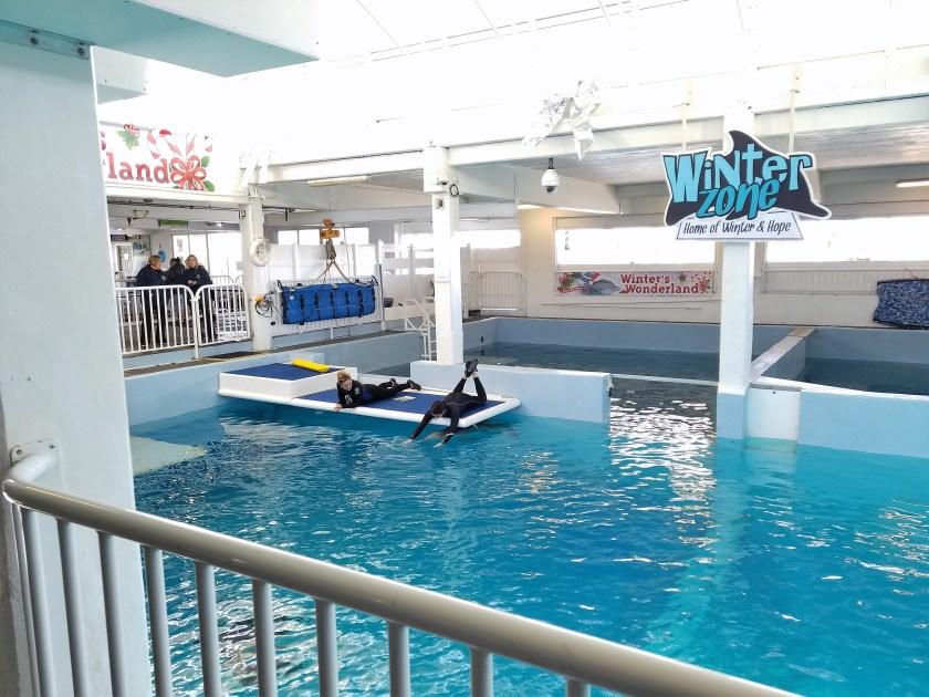 Winter the dolphin enrichment