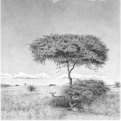 Kalahari Couple | Unique African Pencil Drawing