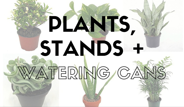 Plants, Stands + Watering Cans