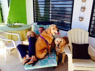 All the dogs love Luke!