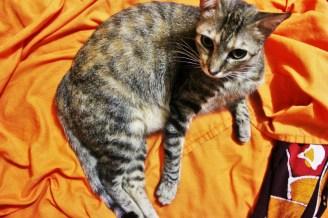 Queenie the cat