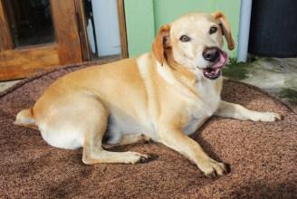 Rayo, the world's slowest dog