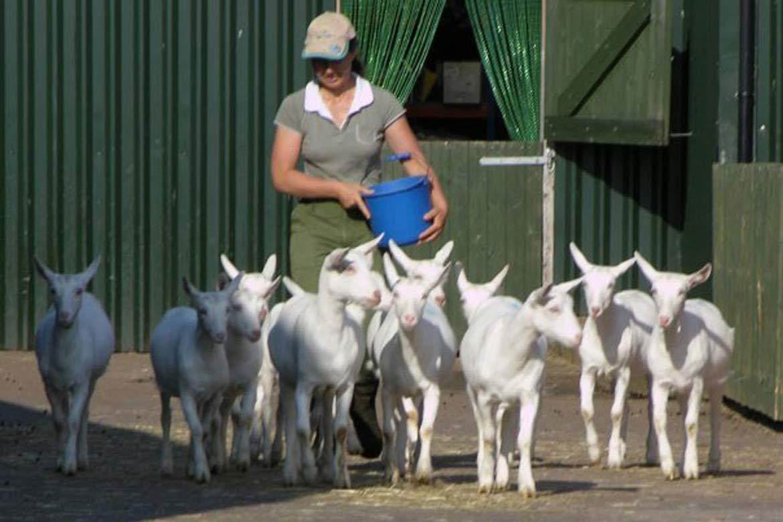 Farm sitting header image - Donna Mulvenna
