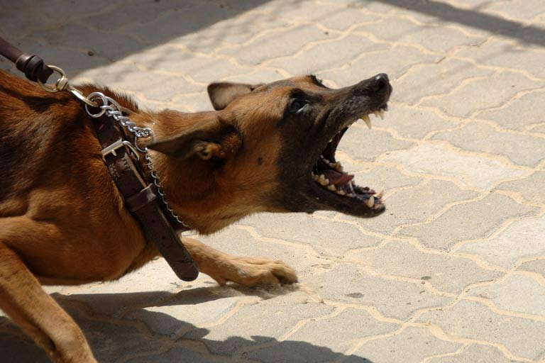 house sitters dealing with agressive dogs
