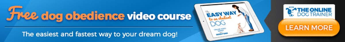 Doggy Dan Video Course for House Sitters