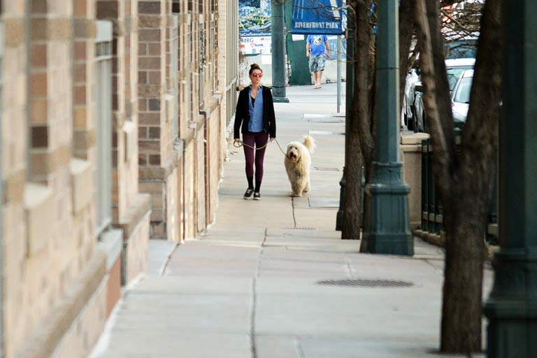 Walking your dog in the city