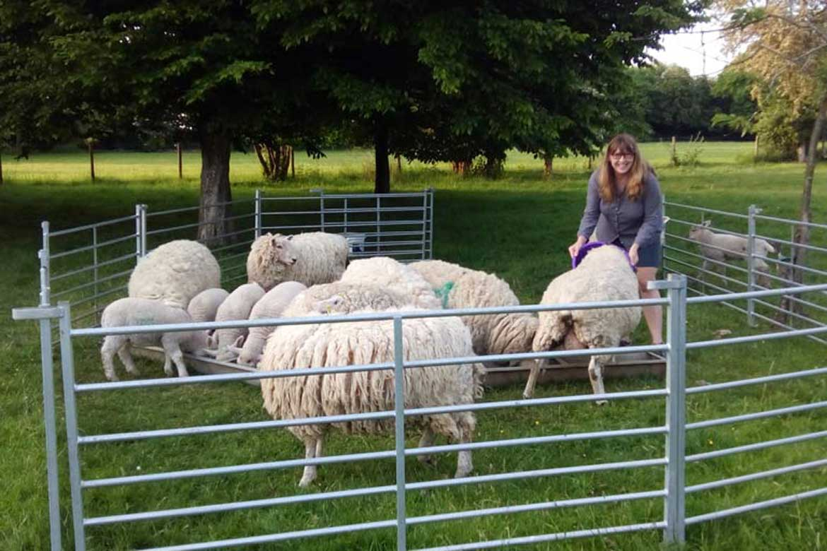 House Sitting with Sheep in the South Downs UK