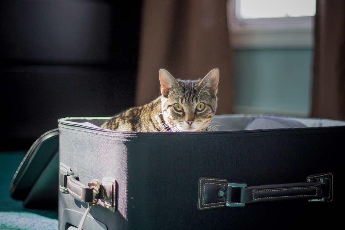 House Sitting Holidays - Cat Hiding