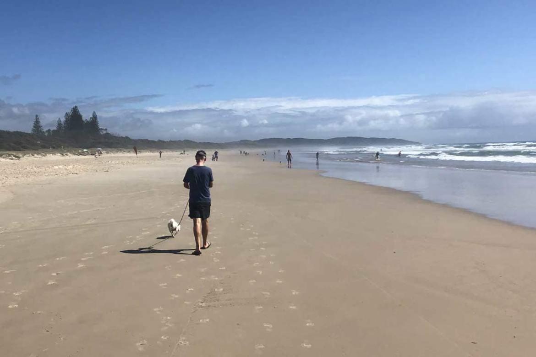 Dog walking on the beach in Australia