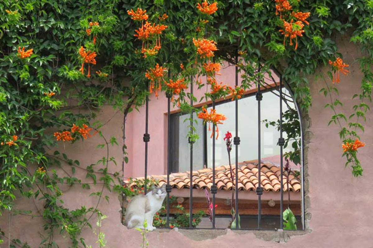 House Sitting in San Miguel del Allende