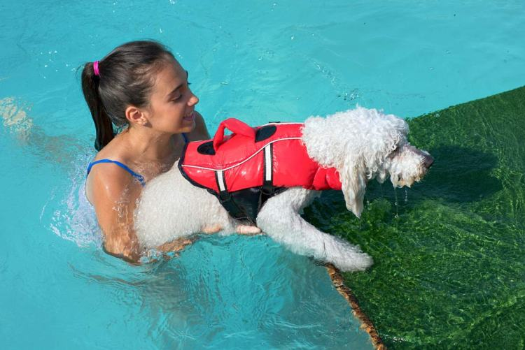 Helping out an older dog in water