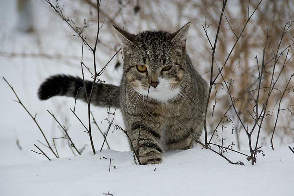 keeping cats safe in snow