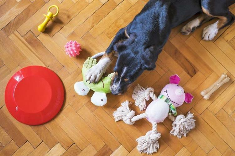 Keeping anxious dogs stimulated with toys