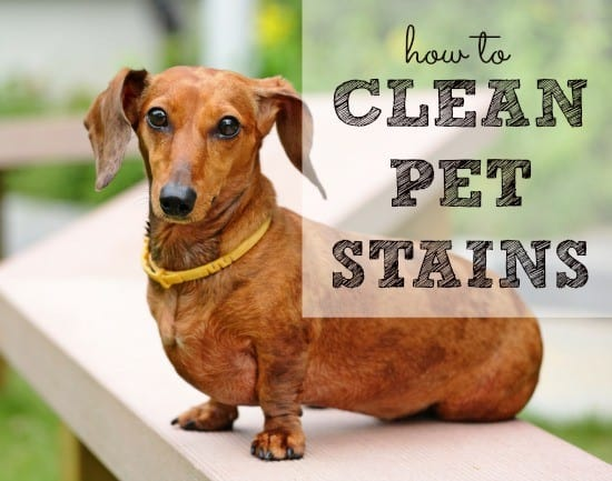 Image Result For How To Get Rid Of Dog Vomit Stains On Carpet