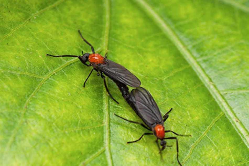 Bugs We Love to Hate: Seasonal Disappearance of Lovebugs