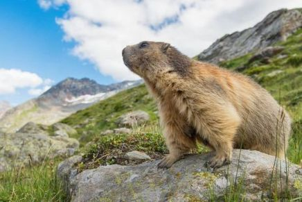 Groundhog Day: Why Celebrate a Rodent?