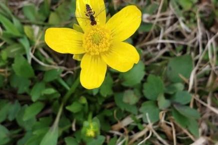 Spring Time In Huntsville: Photo Story