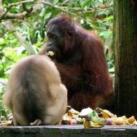 Turismo en Borneo ¿Qué excursiones podemos hacer desde Kota Kinabalu en la Isla de Borneo?