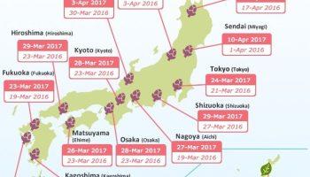 Floracion cerezos en Japón en 2017