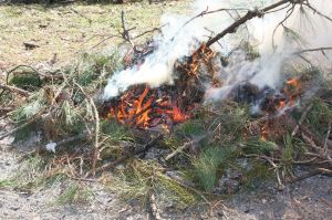 Small branches periodically added to the piles will encourage more rapid combustion of green wood.