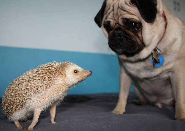 hedgehogs!