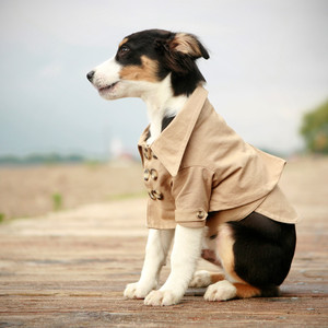 Canine Trench Coat