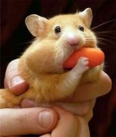 Loving that carrot.