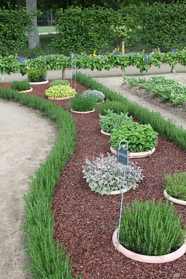 herb garden in sunken pots… keeps it nice and organized and keeps the herbs fr